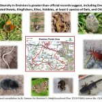 Breinton Biodiversity Poster