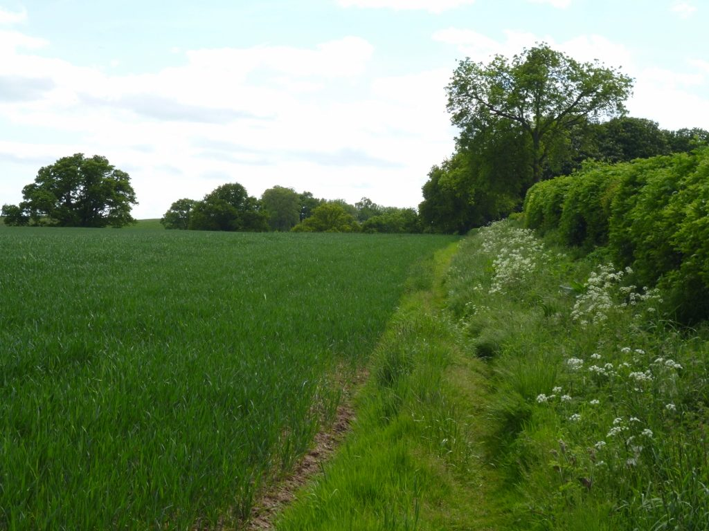 Hedge marking part of the western boundary of the Parish of Breinton (N. Geeson)