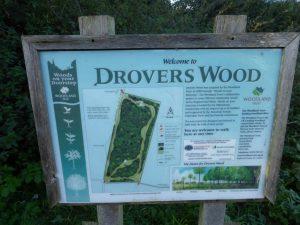 Interpretation board at Drovers Wood (N. Geeson)