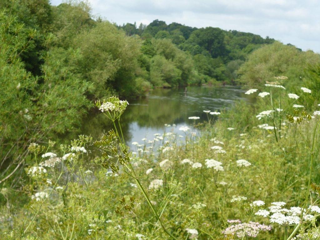 The River Wye has cut through Devonian Raglan mudstones to form a steep-side gorge by Breinton Springs (N. Geeson)
