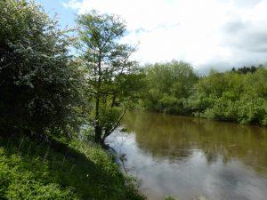 River Wye near Breinton Springs
