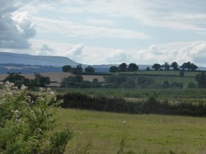 Rolling landscape, looking west to Hay Bluff and the Black Mountains (N. Geeson)
